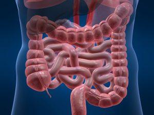 Paraziții intestinali