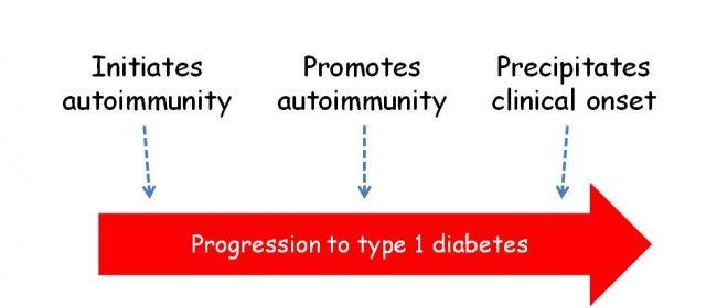 Virusurile implicate in diabetul zaharat tip 1