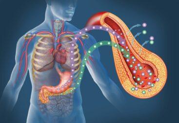 Diabetul si pancreasul